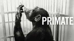 Primate - The Daily Activities of a Primate Research Center